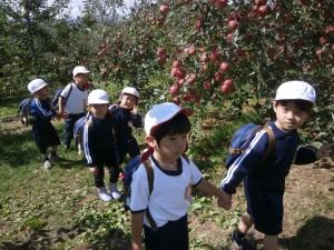 りんご16